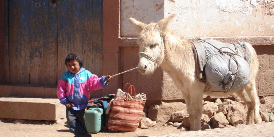 hemiland-donkey60